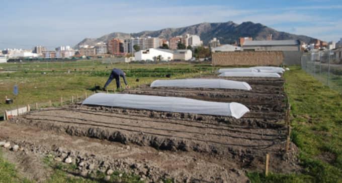 32 usuarios de los huertos urbanos municipales incumplen la normativa