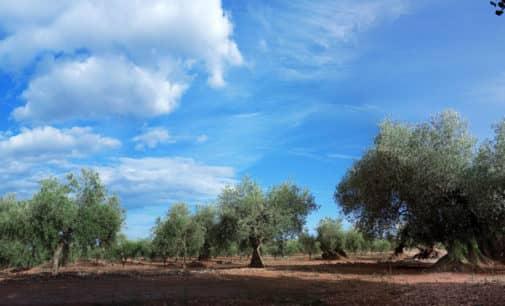 El PP solicita afear a la conselleria por la supresión de ayudas a la agricultura ecológica en la localidad