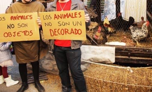 La Plataforma Animalista califica de 'chantaje' condicionar las Fiestas del Medievo al uso de animales