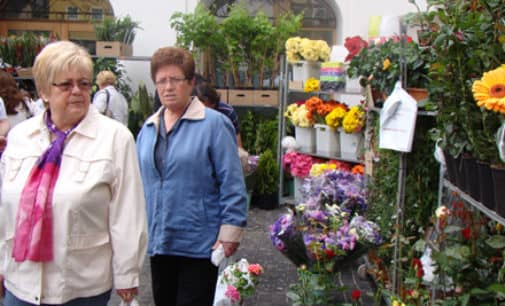El Mercado de las Flores se traslada a la plaza de Santiago