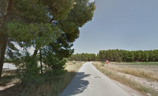 Los Verdes intentarán evitar la tala de pinos en una parcela de la carretera de Caudete