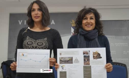 Villena inicia un plan para el control de unos doscientos gatos callejeros