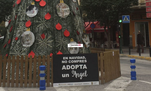 El Ayuntamiento rectifica el lema del árbol de Navidad