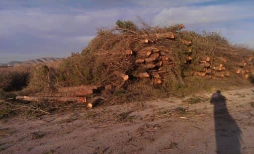El PSOE denuncia la tala de más de 300 pinos en la zona de los Prados de Galeno