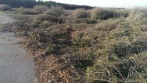 zona-donde-estaban-los-pinos-talados-hace-una-semana