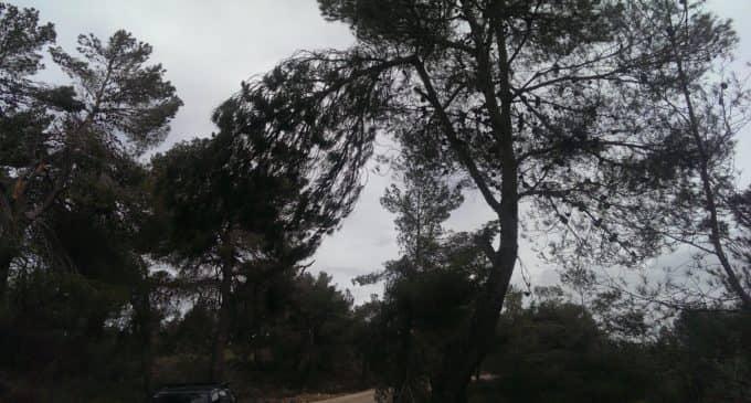 El PSOE denuncia el peligro existente en los caminos de acceso a la colonia de la Sierra Salinas