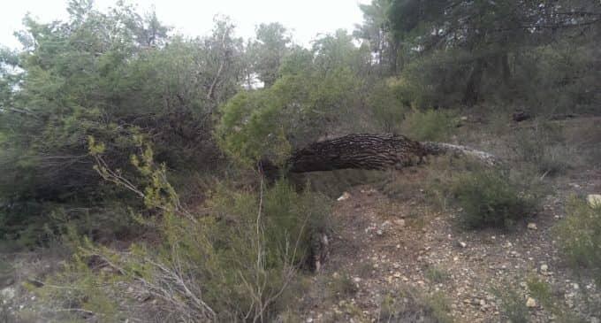 Medio Ambiente solicitará al Consell que el conjunto de Sierra Salinas sea declarado de utilidad pública