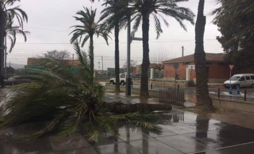 Villena retirará dos palmeras en mal estado del paseo Chapí
