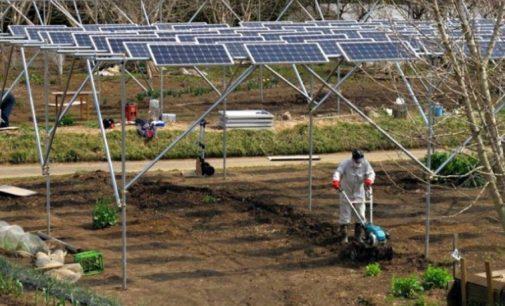 Villena y la SEAE organizan esta semana el taller sobre energía fotovoltaica y agricultura ecológica