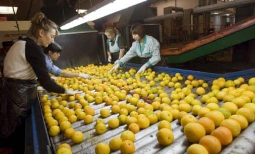 Biar acogerá el primer encuentro de mujeres rurales artesanas y emprendedoras de la Comunidad Valenciana