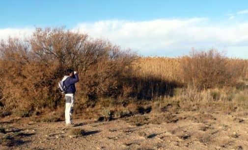 Villena inicia la recuperación de la charca de los Cabezos con voluntarios medioambientales