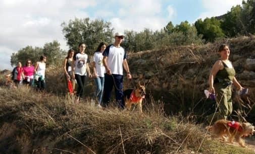 188 perros participaron en la Marcha Canina organizada por la Protectora de Villena