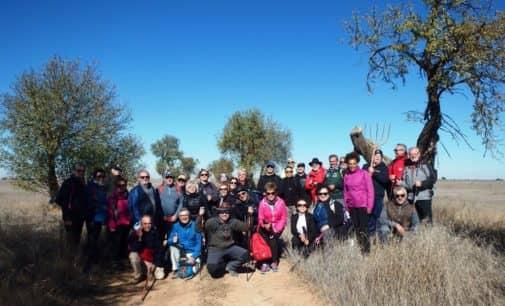 La asociación amigos del camino de Santiago de Villena realiza la 9º etapa del camino del sureste