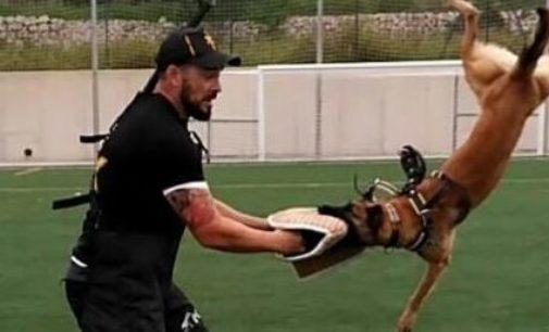 Prueba selectiva para perros de utilidad en Villena