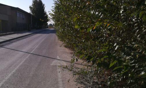 El PSOE pide la retirada de las ramas que invaden la carretera de acceso al IES Navarro Santafé