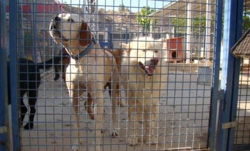 Villena se suma a la promoción del bienestar de los animales de compañía