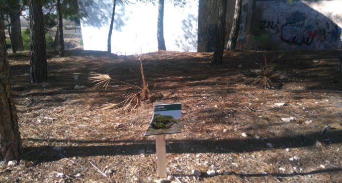 El Partido Popular denuncia la falta de mantenimiento del parque urbano de Las Cruces