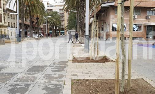 Villena planta plátanos en los viejos alcorques de palmeras del paseo Chapí