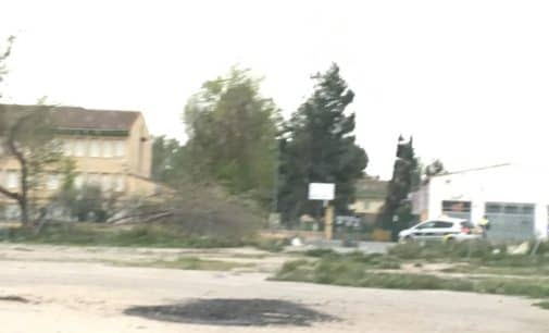 El fuerte viento derriba un árbol junto al colegio Ruperto Chapí