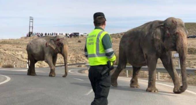 Accidente de camión cargado de elefantes de circo pone de relieve la imposibilidad de garantizar protección animal