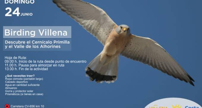 Jornada de turismo ornitológico en Villena