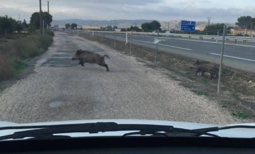 El PSOE pide un informe sobre el estado de la valla de la autovía para evitar que se crucen animales