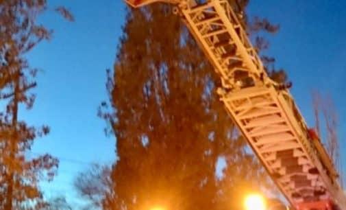 Los bomberos sanean las ramas de dos árboles en Gil Osorio