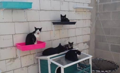 La Protectora de Animales organiza una jornada de puertas abiertas del albergue