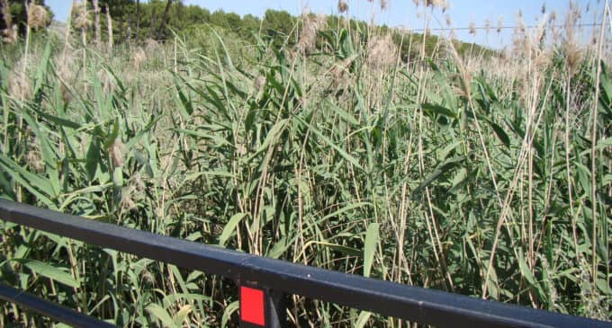 Vecinos del paraje de La Hoya piden la limpieza de la Acequia del Rey