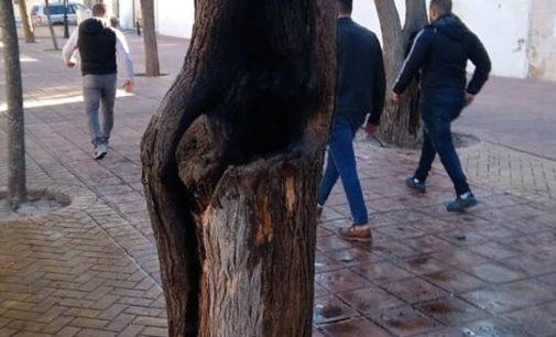La Junta de la Virgen denuncia actos vandálicos continuados en el santuario