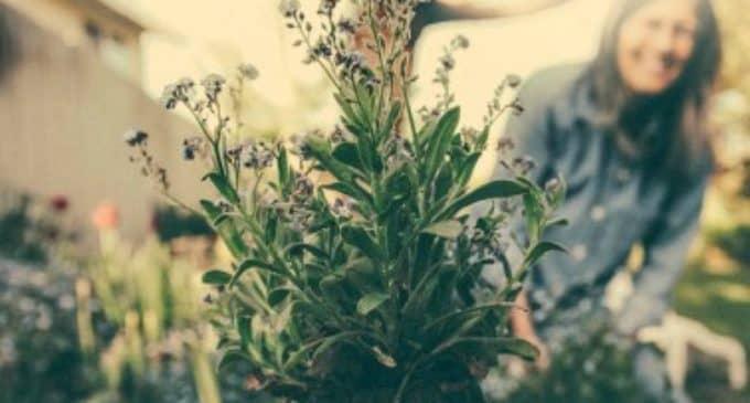 La Sede Universitaria organiza  un taller de biodiversidad