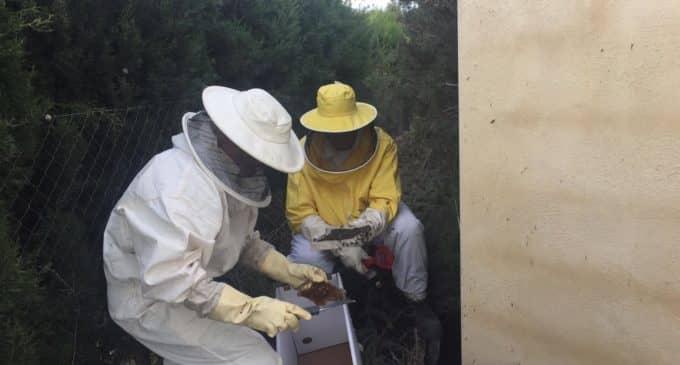 Los bomberos retiran un enjambre de miles de abejas en Beneixama