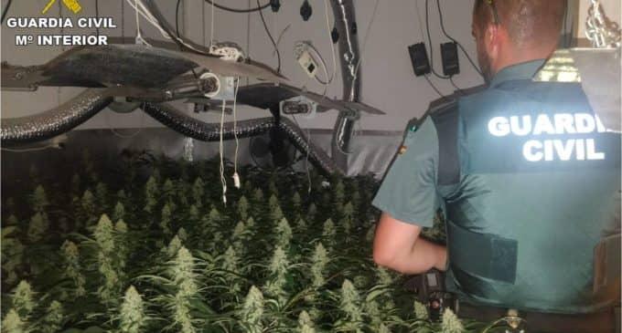 Detenidos una mujer y un hombre por una plantación de marihuana