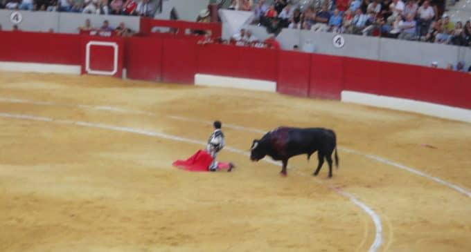 La Asamblea Verde se opone a la corriad de toros y muestra su preocupación por la interpretación del pacto de gobierno por parte del PSOE