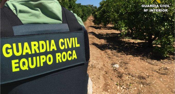 La Guardia Civil detiene a 4 personas en Villena  por robo de aceitunas