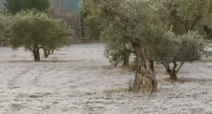 Villena alcanza los 7,4 grados bajo cero en la madrugada del domingo al lunes