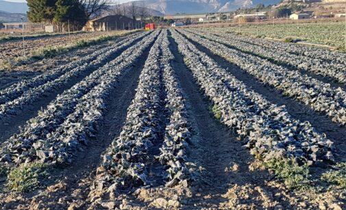Los nuevos desafíos de la agricultura en Villena