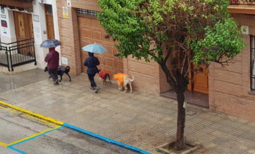 Normas para el paseo de perros durante la cuarentena