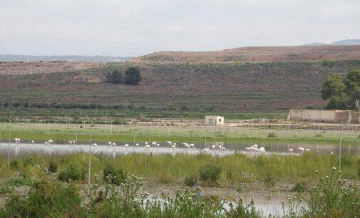 El Ayuntamiento plantea adquirir terrenos situados junto a la Laguna de Villena