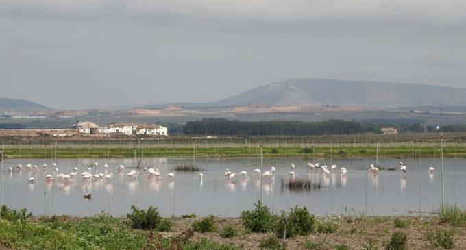 El agua y los flamencos vuelven a la Laguna de Villena