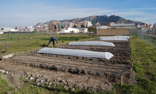 Amplían el plazo de presentación de solicitudes de parcelas en huertos urbanos