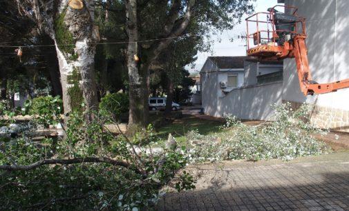 Trabajo intensivo de poda de seguridad en La Encina
