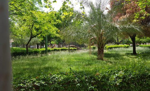 Villena sacará a licitación el mantenimiento de las zonas verdes por 284.000 euros al año