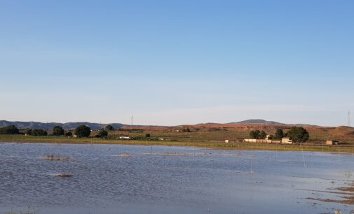 Las aves vuelven a la Laguna de Villena