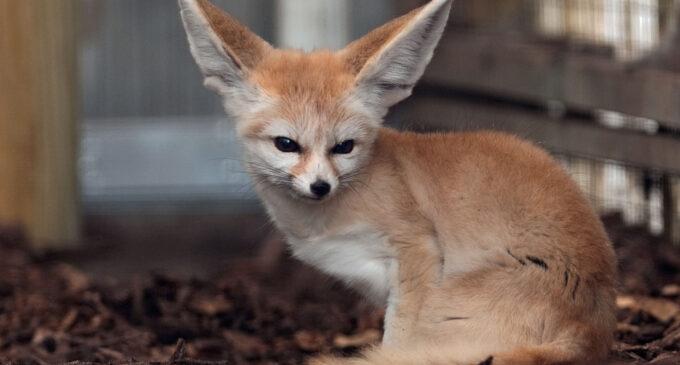 El 86% de los españoles considera insegura la tenencia de animales exóticos como mascota