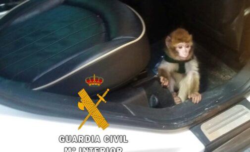 España, billete para el tráfico animal