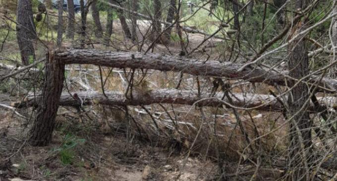 Árboles caídos cortan el sendero de la Cueva del Lagrimal