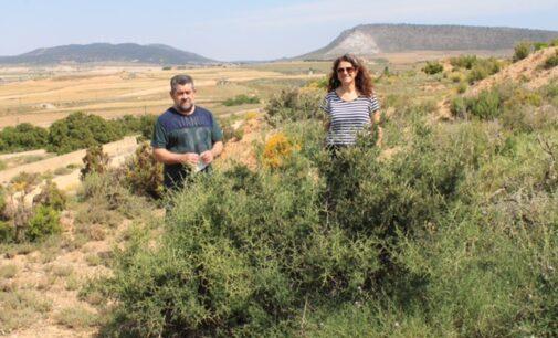 Descubren una planta no catalogada en la Comunidad  Valenciana a través de una actividad de la Sede Universitaria  de Villena