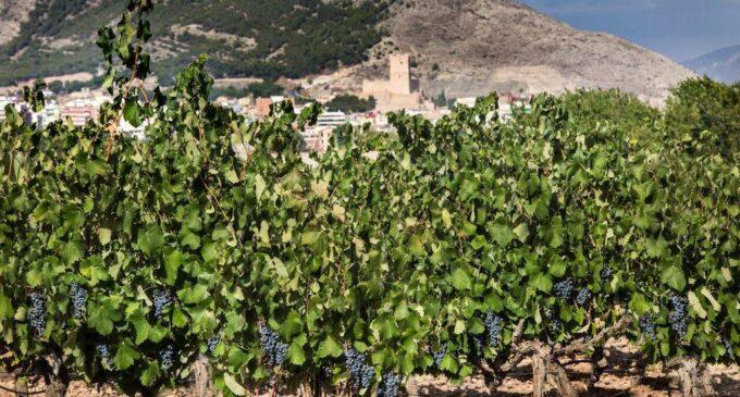 El Consejo de Ministros aprobó ayer un paquete de medidas extraordinarias para el sector del vino