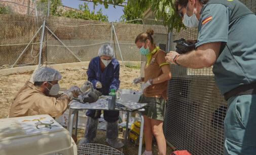 AAP Primadomus y la Guardia Civil rescatan doce lémures